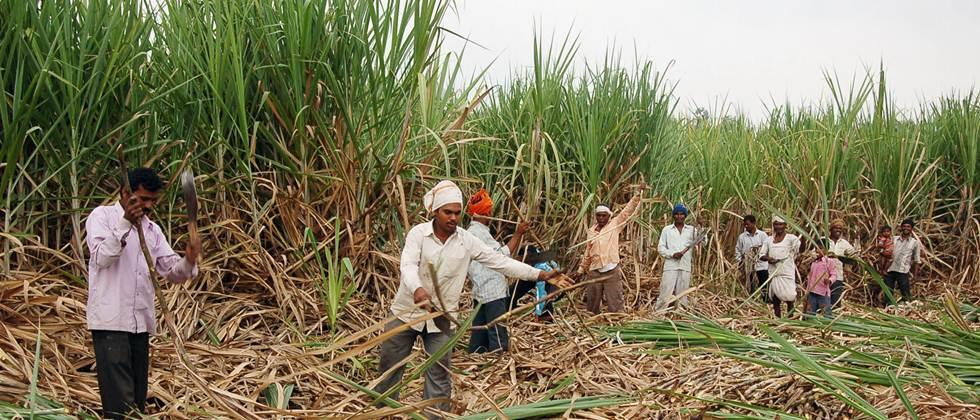 Alternative arrangements should be made for the voting of sugarcane workers