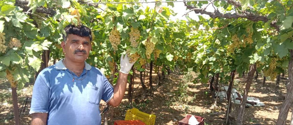 Sunil Dhare in Grape farm