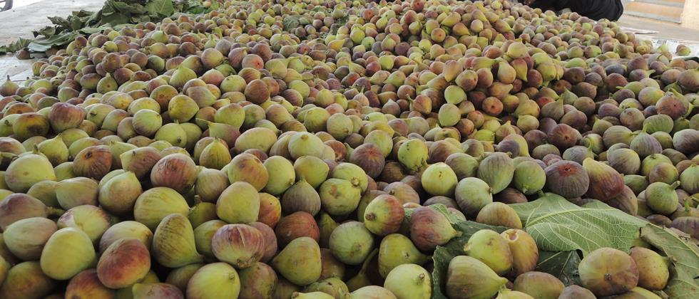 Fig 300 to 4500 rupees per quintal in Aurangabad