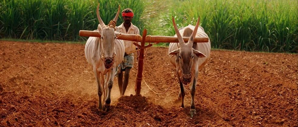 agriculture department has responsibility of contract farming