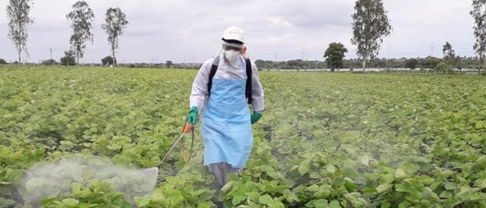 Safe way to Use pesticides in agriculture