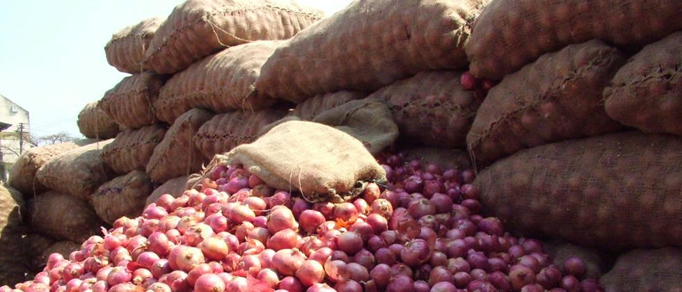 By Farmers Association in Khandesh 'Cotton burn, onion price' movement