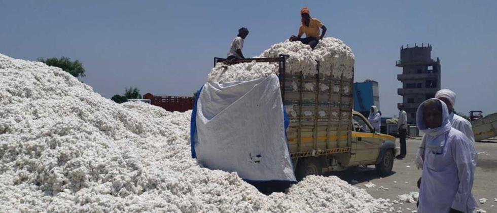 Cotton procurement centers started at four places in Ambad taluka