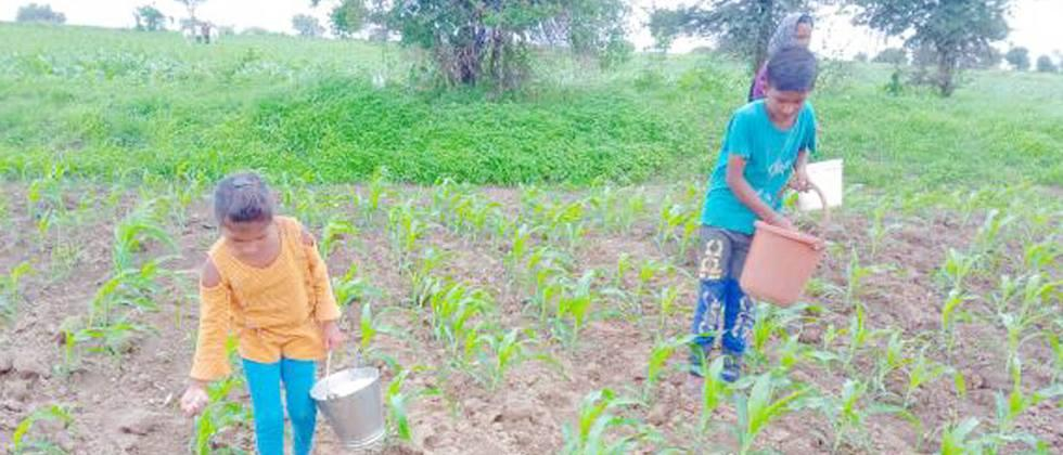 Crops benefit from wet rains in Khandesh