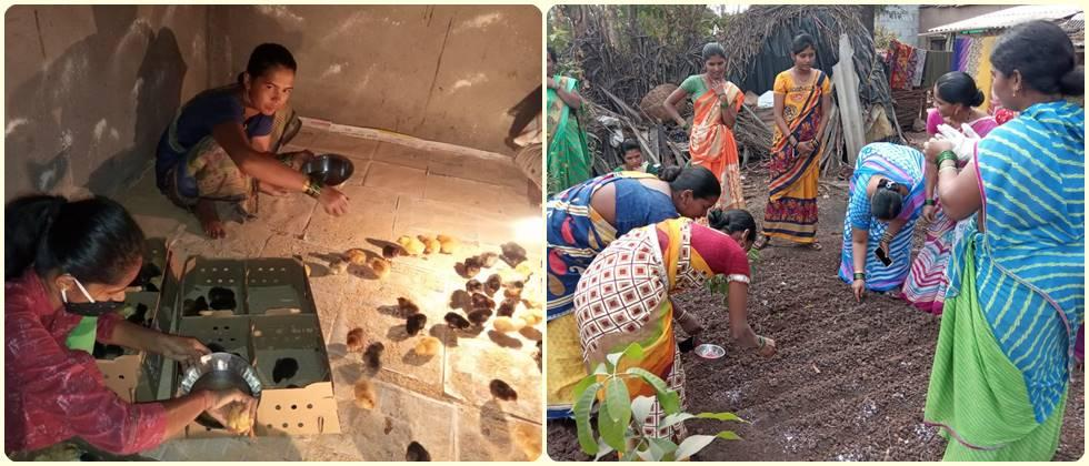 vermicompost production and poultry chicks upbringing