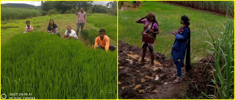Communication with farmers about various field activities