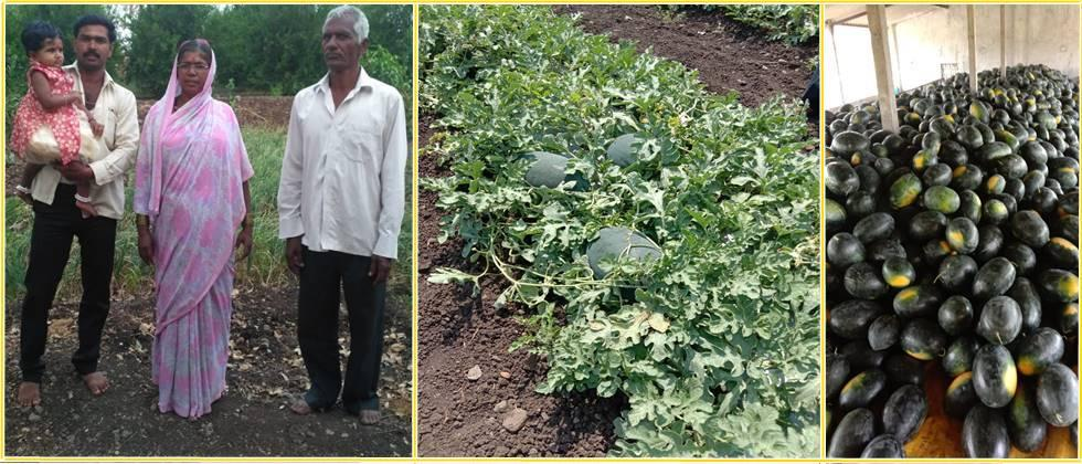 magar brothers' watermelon plot and good quality watermelons