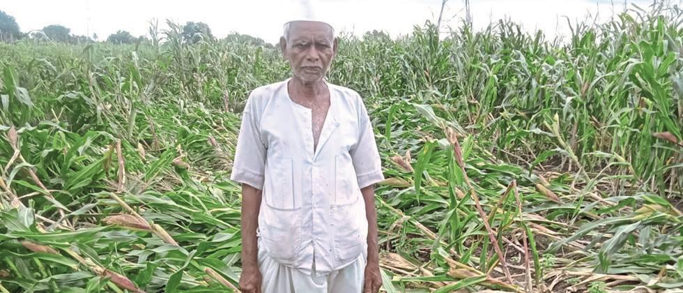Damage to crops on 37,000 hectares in Nashik district