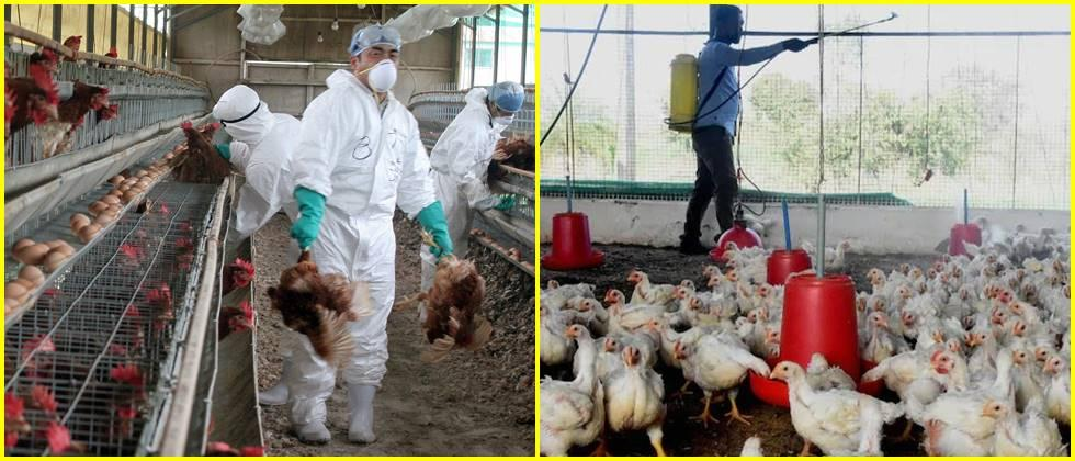 Preventive measures to prevent bird flu