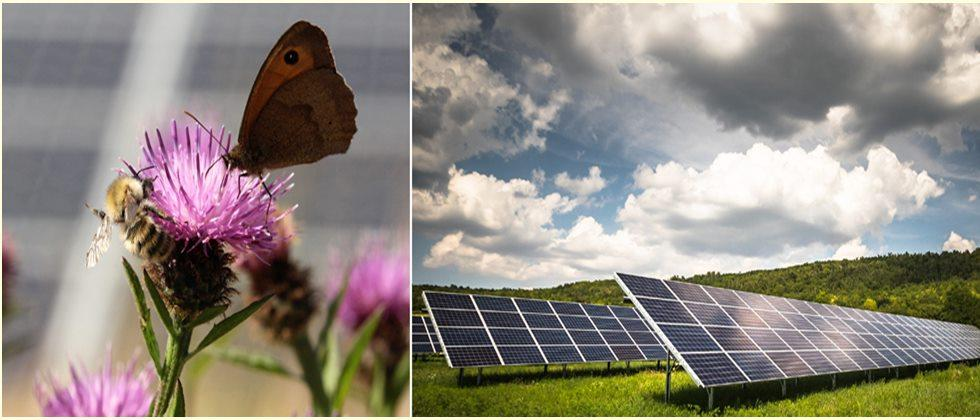 Ten ways to ensure bees benefit from the solar power boom