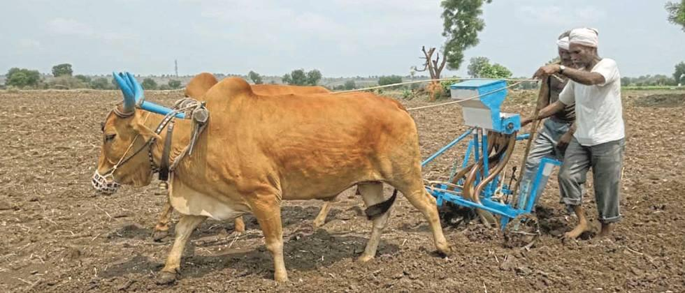 74.43 percent sowing in Parbhani district