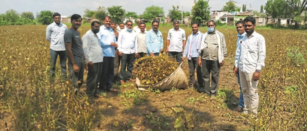 Soybean in Risod taluka Two and a half quintals productivity per hectare