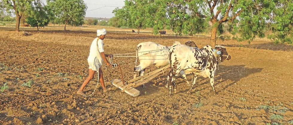 We doing to work in our farms' ...
