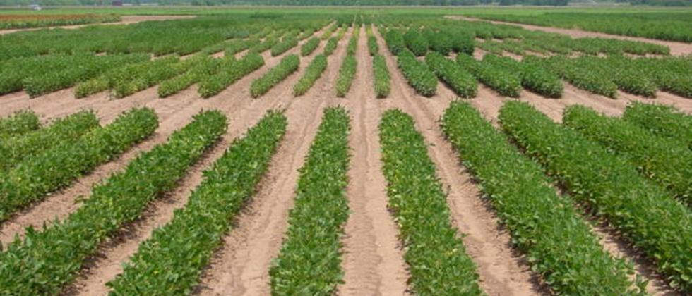 'Soybeans in five districts Seed production on 340 hectares