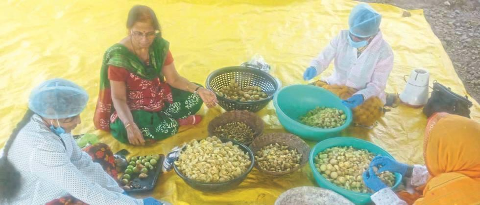 Great opportunity for amla processing industry: Dr. Umrikar