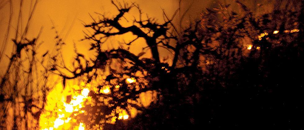 Large damage to tree resources by fire in western belt of Nashik