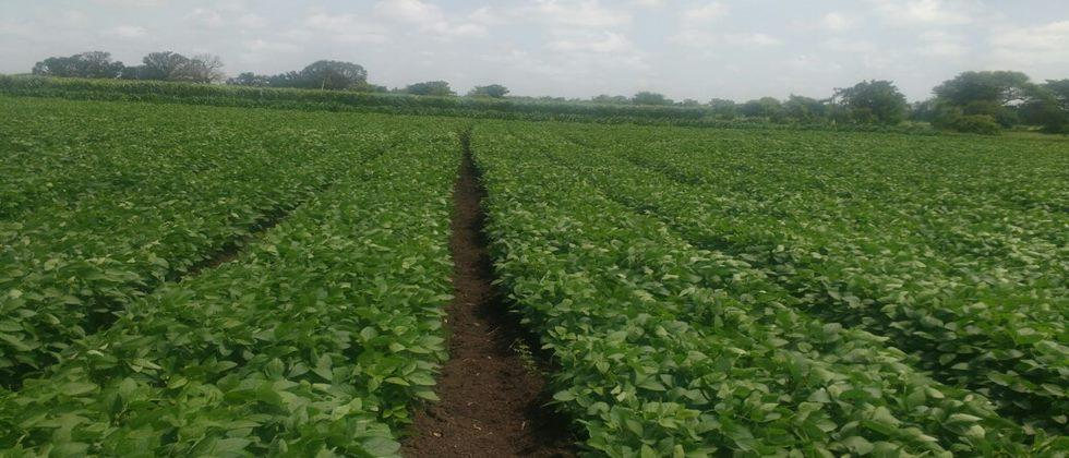 Soybean sowing problems & its answers