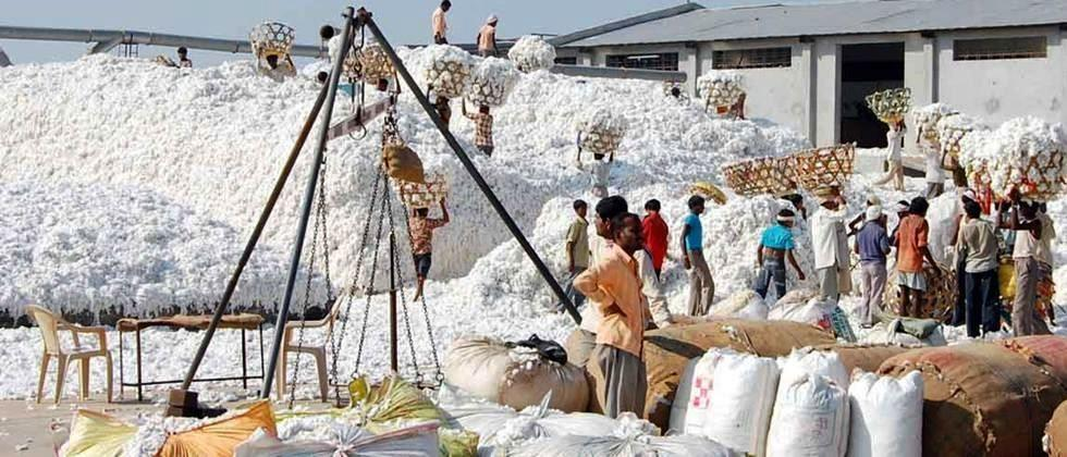 Farmers are allowed to sell cotton only on certain conditions