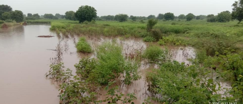 One and a half lakh hectare crop destroyed due to heavy rains in Nagar district