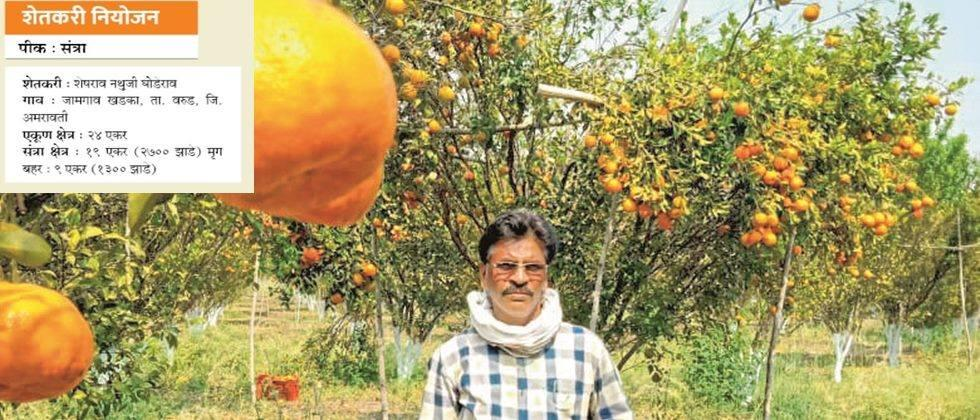Sheshrao Ghoderao in his orange orchard.