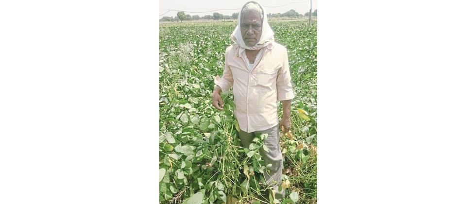 One and a half thousand quintals of soybean seeds will be available in Parbhani