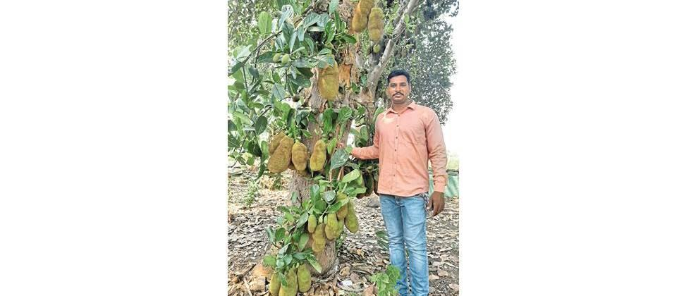 The cultivation of chanterelle on the dam is worth lakhs