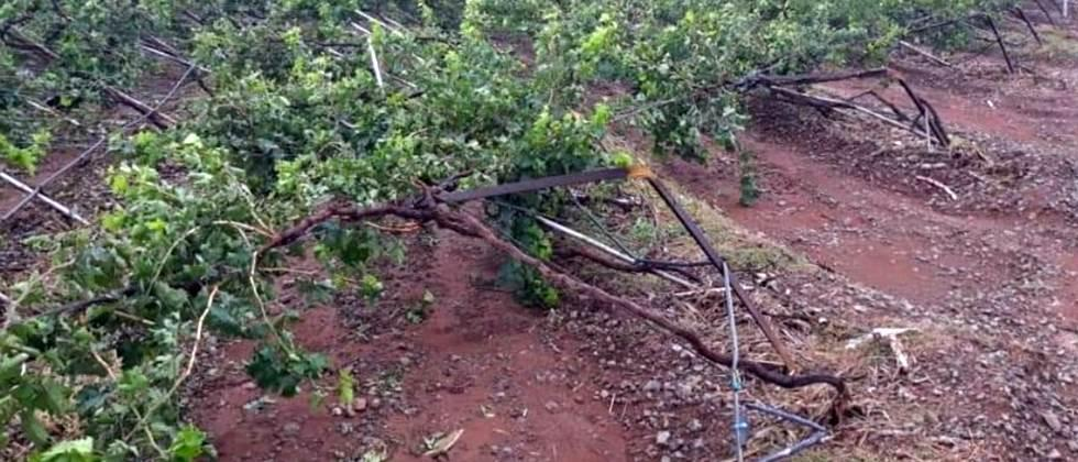 crops damage due to cyclone