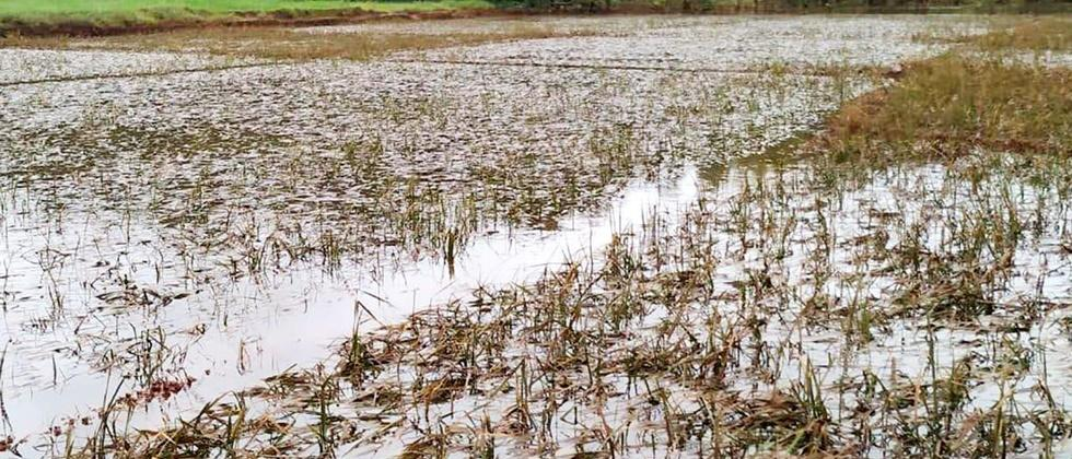 Heavy rains hit over 64 lakh hectares: Tomar