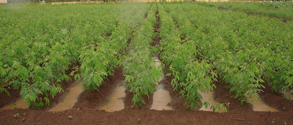 soil water conservation in field