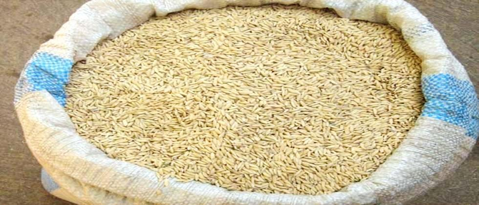 Pick up the grain at the center in Gadchiroli district
