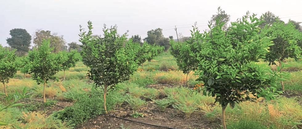 In Aurangabad, Jalna and Beed districts, only 35% of the target orchards have been planted