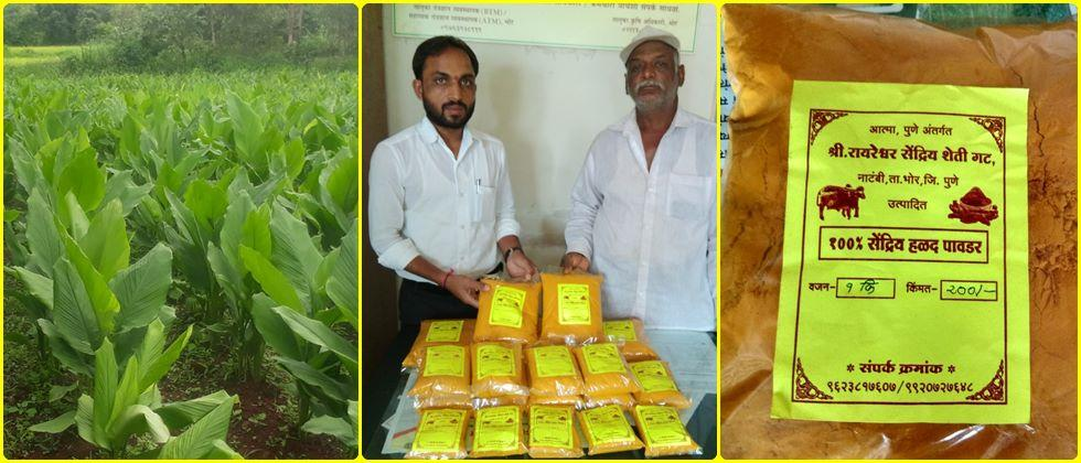 Organically grown turmeric is sold by Rayareshwar brand