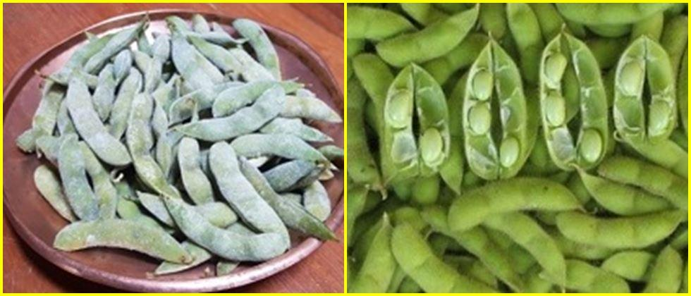 Two to three seed pods of Swarn vasundhara variety