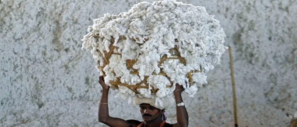 cotton procurement status