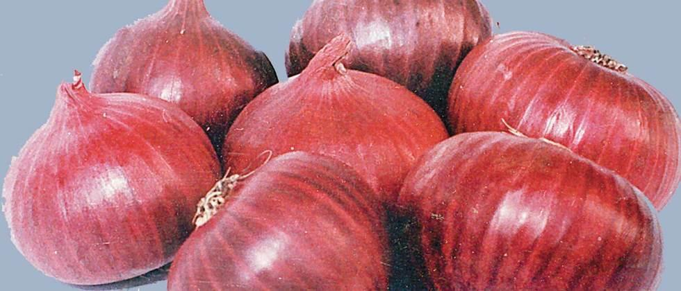 One lakh hectare onion cultivation in the town