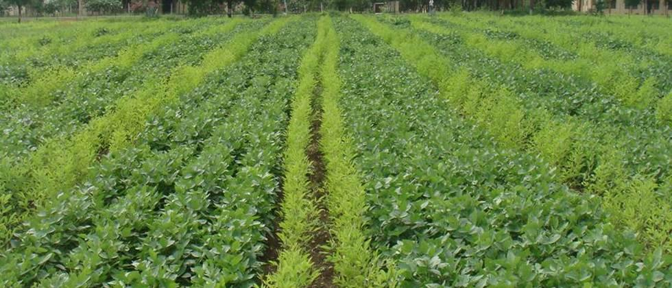 seed treatment helps in vigorous growth of crops