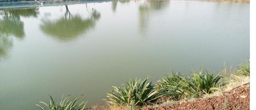 quality measures of water for fish farming