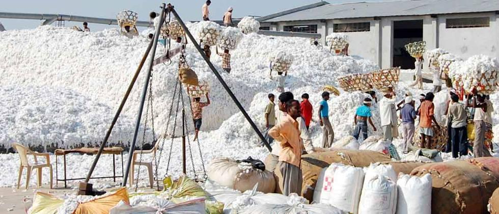 cotton procurement