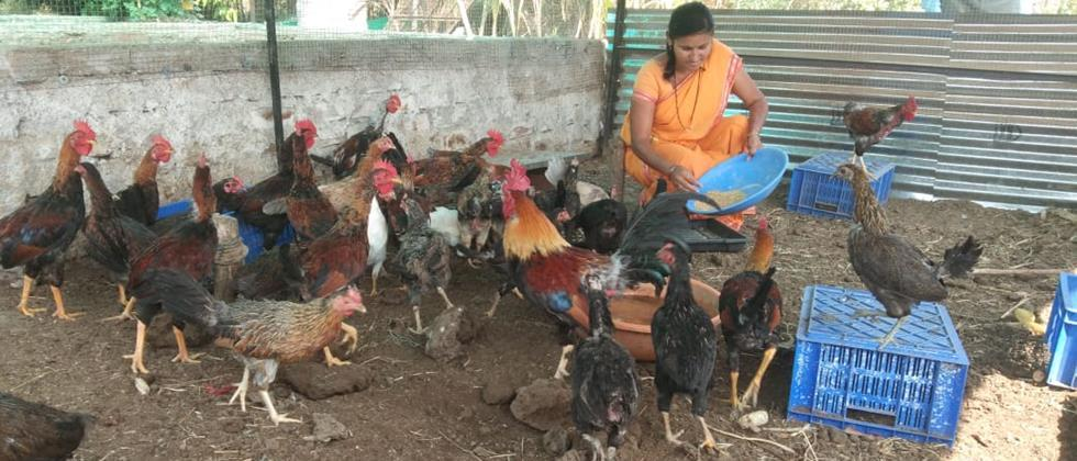 Vaishalitai engaged in poultry farming in the backyard