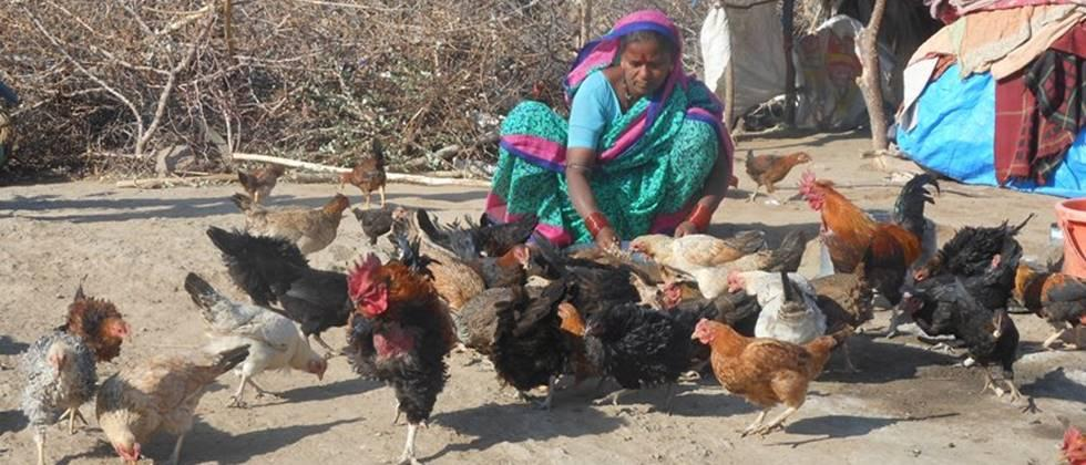 Poultry farming in rural areas can be boosted by setting up proper infrastructure.