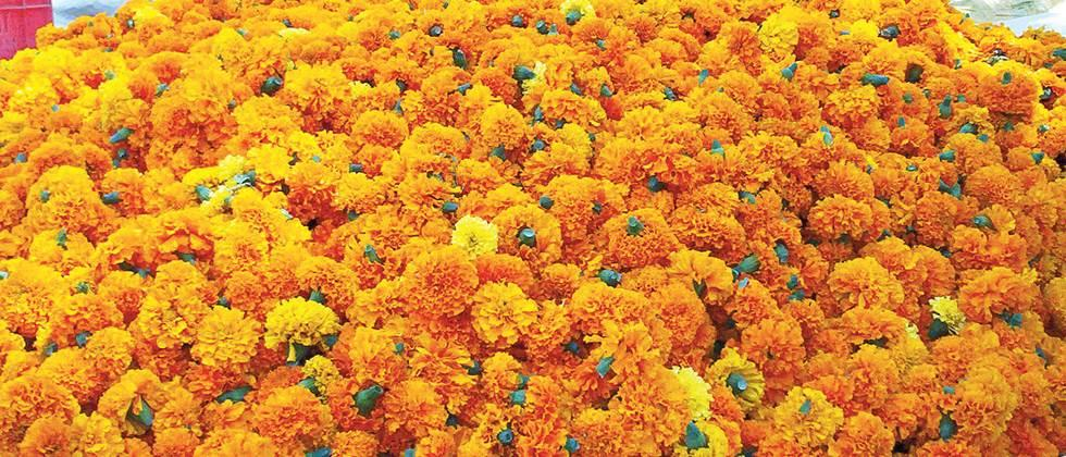 Happy Dussehra, Diwali to flower growers
