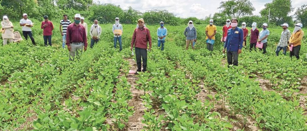 Use integrated pest management in soybeans: Nagwade