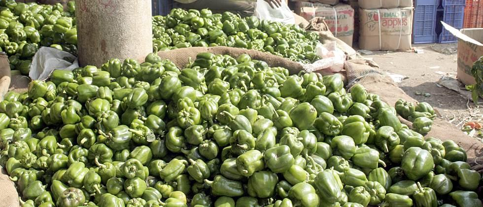 2500 to 4375 per quintal of chilli in Nashik