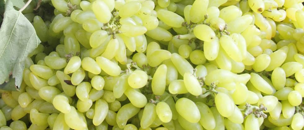 Per quintal of grapes in Aurangabad Rates ranging from Rs 6,000 to Rs 8,000