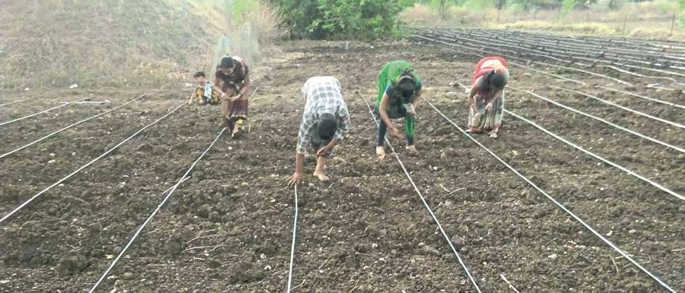 Pre-monsoon cotton cultivation started in Aurangabad district