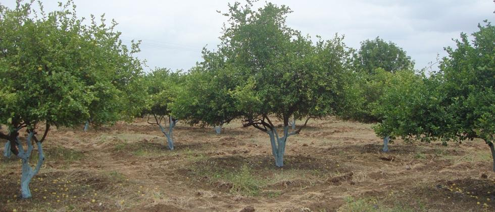 Orchard cultivation on 335 hectares from MGNREGA