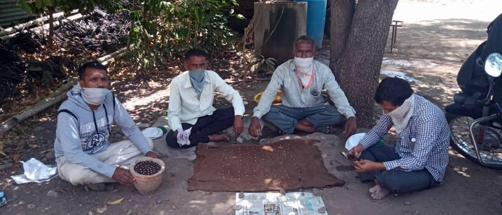 farmers testing germination capacity of soybean seeds