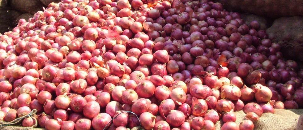 onion protection from thieves