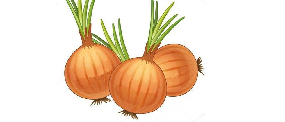 Developed a new variety of onion