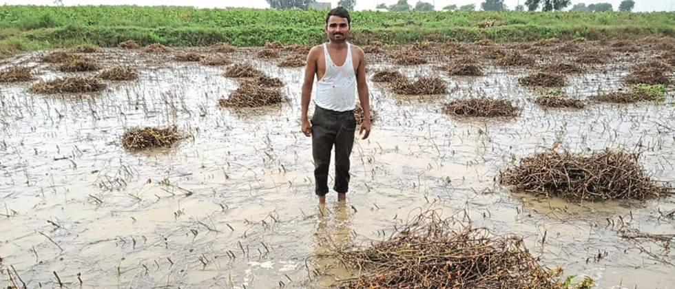 Soybean crop in Parbhani, Hingoli district in water